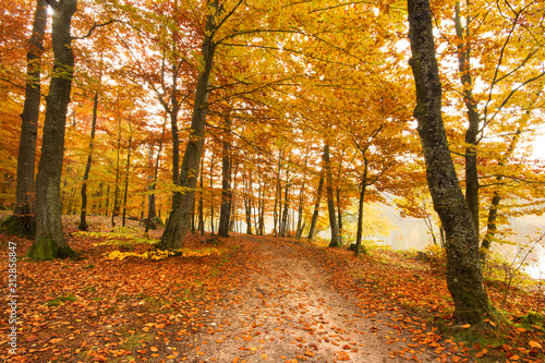 Staande foto Herfst Road in a colorful, autumn forest.Pomerania ,Poland