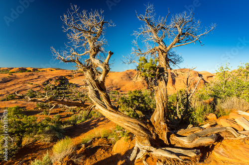 Printed kitchen splashbacks Australia Scenery at Delicate Arch, Arches National Park, Utah, on a bright sunny day