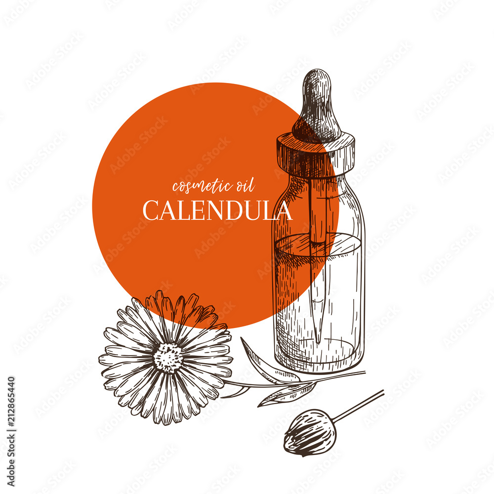Fototapety, obrazy: Hand drawn set of essential oils. Vector calendula flower. Medicinal herb with glass dropper bottle. Engraved art. Good for cosmetics, medicine, treating, aromatherapy, package design health care.
