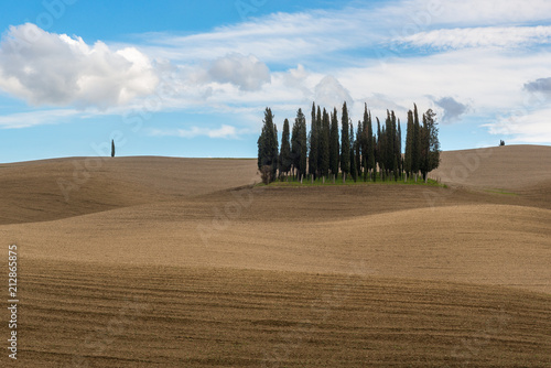 Foto  Cypress trees near San Quirico d'Orcia, Italy