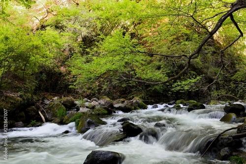 Foto op Canvas Rivier 新緑の中の渓流