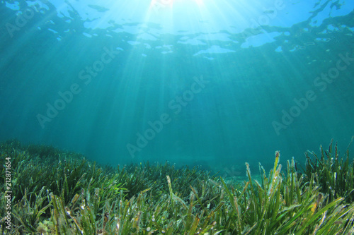 Green sea grass blue ocean underwater