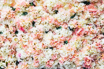 rose flowers are white and pink. background of garden flowers