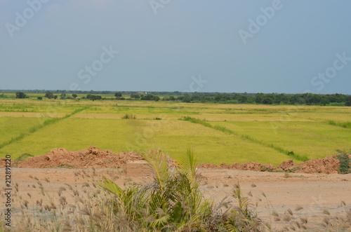 Poster Donkergrijs landscape asia rise field