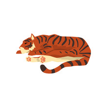 Tiger Sleeping On The Floor, W...