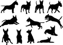 Bull Terrier - Silhouetten