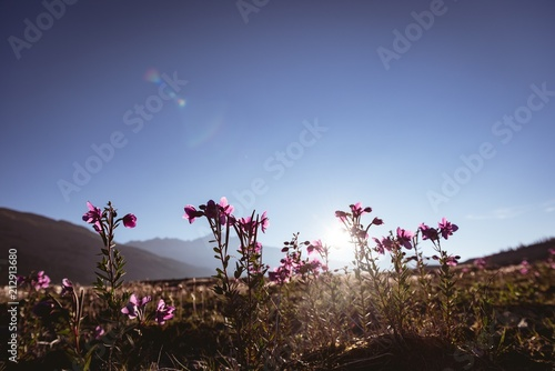 Flowers field in countryside