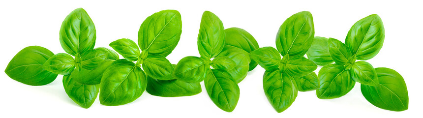 Fresh green basil leaves is...