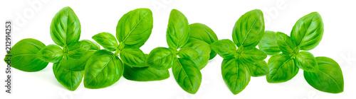 Cuadros en Lienzo Fresh green basil leaves isolated on white background