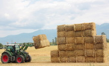 Hay Tractor Stacking Hay Bales On A Big Pile
