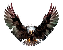 Painted Flight Bird Bald Eagle...