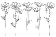 Vector Set With Outline Cosmos...