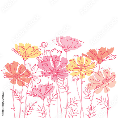 Vector bouquet with outline Cosmos or Cosmea flower bunch, ornate leaf and bud in pastel pink and orange isolated on white background. Contour blooming Cosmos plant for enjoy summer design.