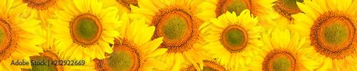 wzor-panoramy-kwiaty-sunfl