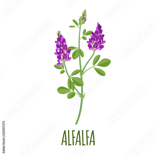 Alfalfa icon in flat style on white background Wallpaper Mural