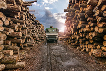 Transport Of Pine Logs In A Sa...