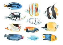 A Set Of Tropical Fish, In A W...