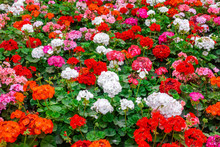 Beautiful Flower Bed Of Colorf...