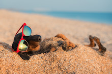 Beautiful Dog Of Dachshund, Black And Tan, Buried In The Sand At The Beach Sea On Summer Vacation Holidays, Wearing Red Sunglasses