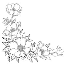 Vector Hand Drawing Corner Bouquet With Outline Anemone Flower Or Windflower, Bud And Leaf In Black Isolated On White Background. Ornate Contour Anemone For Spring Or Summer Design Or Coloring Book.