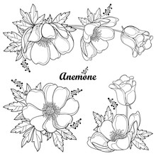 Vector Set Of Hand Drawing Outline Anemone Flower Or Windflower, Bud And Leaf In Black Isolated On White Background. Ornate Contour Anemones For Spring Or Summer Design Or Coloring Book.