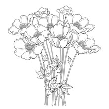 Vector Hand Drawing Bouquet With Outline Anemone Flower Or Windflower, Bud And Leaf In Black Isolated On White Background. Ornate Contour Anemones For Spring Or Summer Design Or Coloring Book.