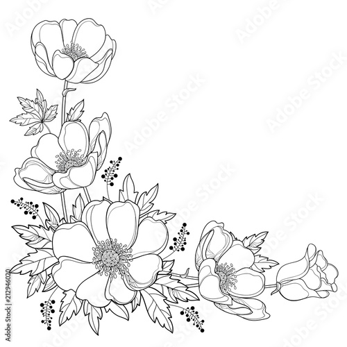 Vector hand drawing corner bouquet with outline Anemone flower or Windflower, bud and leaf in black isolated on white background Wallpaper Mural