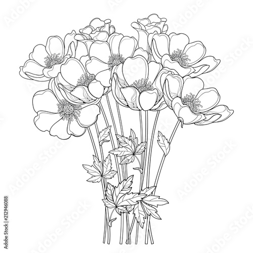 Fényképezés Vector hand drawing bouquet with outline Anemone flower or Windflower, bud and leaf in black isolated on white background