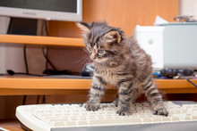 A Little Kitten Near The Computer On The Keyboard. Work In The Office At The Computer_