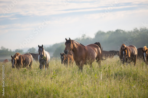 The herd of horses at dawn Poster