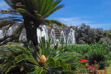 Spain Garden With Flowering Sago Palm, Cycas Revoluta And Fountain.