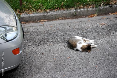 Fototapeta Summercat
