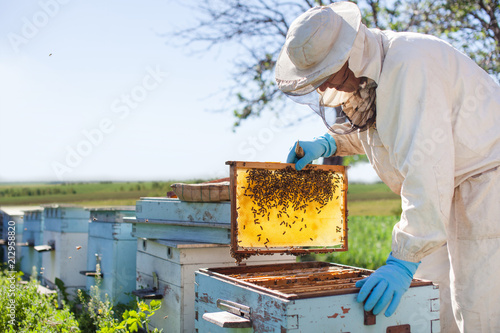 Photo Beekeeper is working with bees and beehives on the apiary