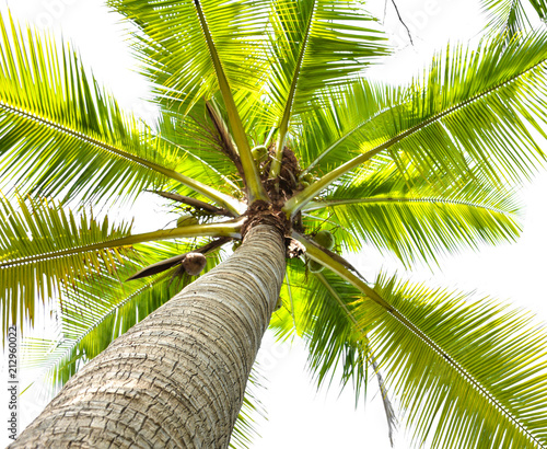 Keuken foto achterwand Palm boom beautiful palm tree