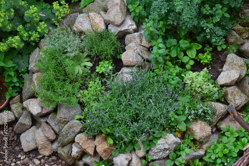 plakat Medicinal herbs in herb spiral, late spring