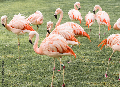 Foto op Aluminium Flamingo funny group of flamingos among grass and tropical view