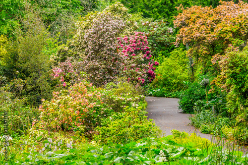 Αφίσα  Flowers and walk way in Botanic Garden
