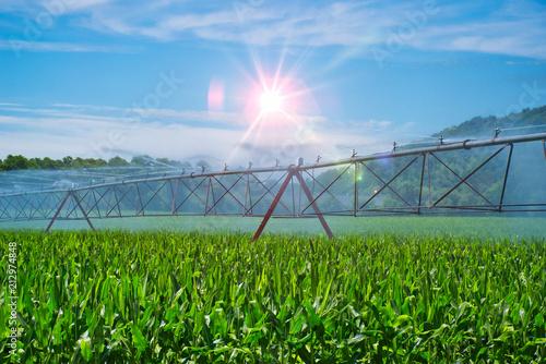 Deurstickers Groene Agricultural Irrigation at Sunset.