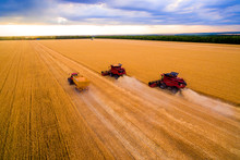 Harvesting Machine Working In The Field.  Combine Harvester Agricultural Machine Ride In The Field Of Golden Ripe Wheat. Harvesting Of Wheat. Top View From The Drone
