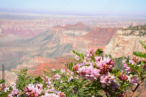Beautiful mountain landscape in Arizona. Flowers blooming on North Rim, Grand Canyon National Park, Arizona, USA.