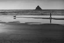 Man Walking His Dog Along The Beach In Oregon In Black And White