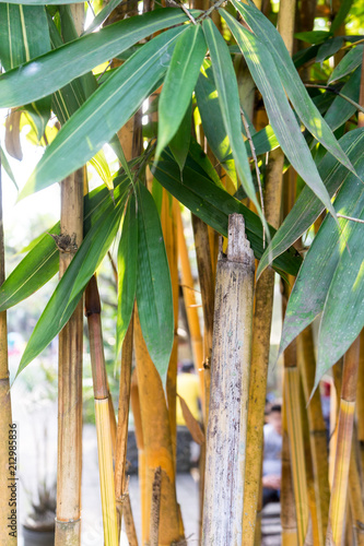 Foto op Plexiglas Japan Bamboo tree and leaf forest for background