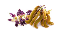 Mucuna Pruriens Isolated On Wh...