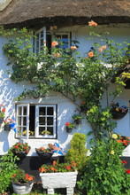 Beautiful Thatched Cottage With Garden In Village Of Branscombe, East Devon