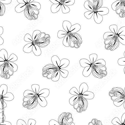 Poster Floral black and white Cassia Fistula - Golden Shower Flower Outline on White Background