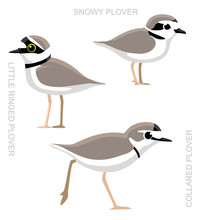 Bird Plover Set Cartoon Vector...