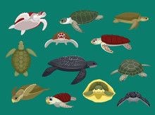 Various Sea Turtle Poses Vector Illustration