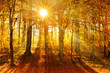 Forest of Deciduous Trees in Autumn, Sunbeams through Fog, Leafs Changing Colour