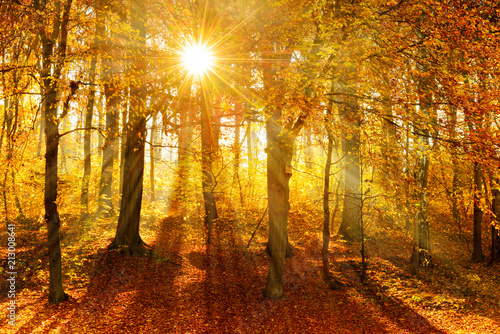 Papiers peints Forets Forest of Deciduous Trees in Autumn, Sunbeams through Fog, Leafs Changing Colour