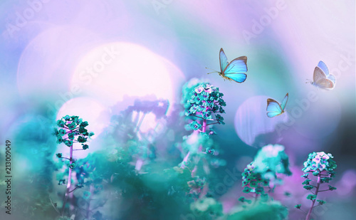 Fotobehang Natuur Wild flowers in field in nature in summer spring in sunlight with beautiful round bokeh with a soft focus and toned in purple pink and turquoise hues close-up. Floral background, copy space.